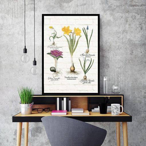 Kwiatowy plakat - Szafirek drobnokwiatowy biały do biura