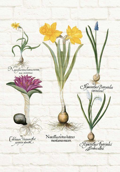 Kwiatowy plakat - Szafirek drobnokwiatowy biały do salonu