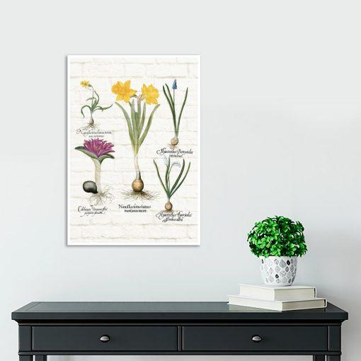 Kwiatowy plakat - Szafirek drobnokwiatowy biały do szkoły