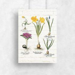 Kwiatowy plakat - Szafirek drobnokwiatowy biały na przedpokój