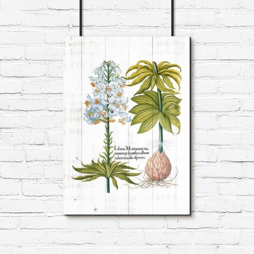 Plakat biała lilia na tle desek