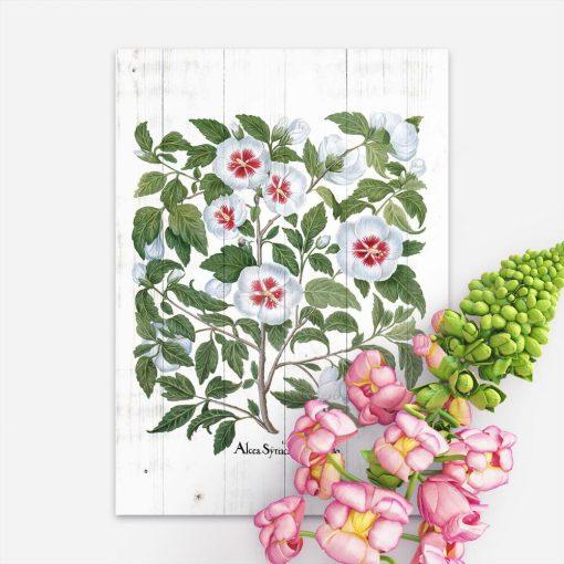 Plakat biała malwa - dekoracja do apteki