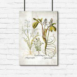 Plakat botaniczny - Plumeria do biura