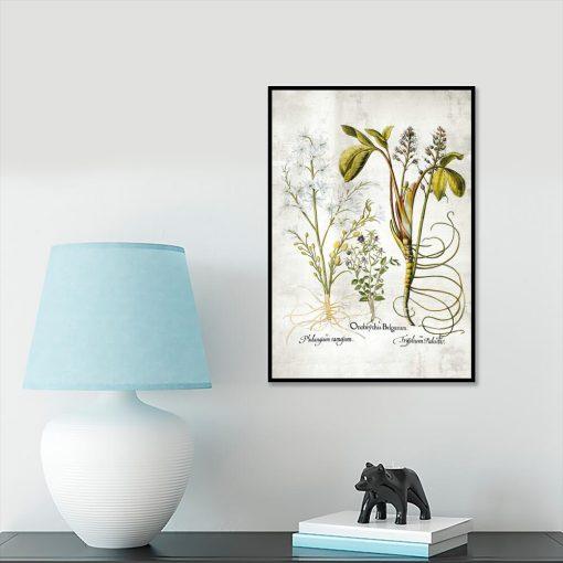 Plakat botaniczny - Plumeria do gabinetu