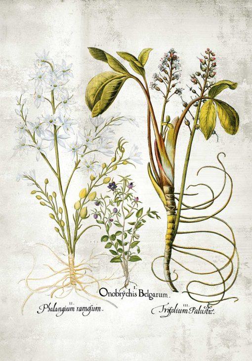 Plakat botaniczny - Plumeria do jadalni i kuchni
