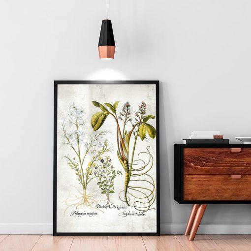 Plakat botaniczny - Plumeria do salonu