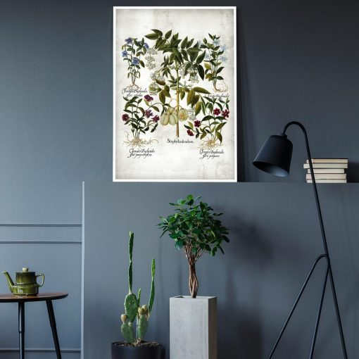 Plakat botaniczny - Powojnik do gabinetu