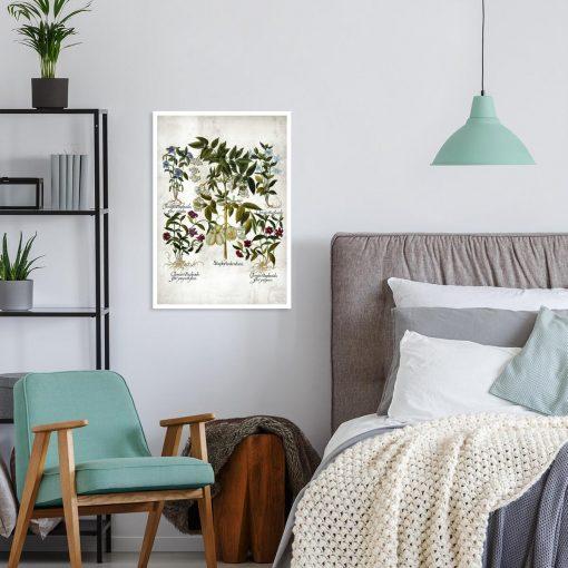Plakat botaniczny - Powojnik do sypialni
