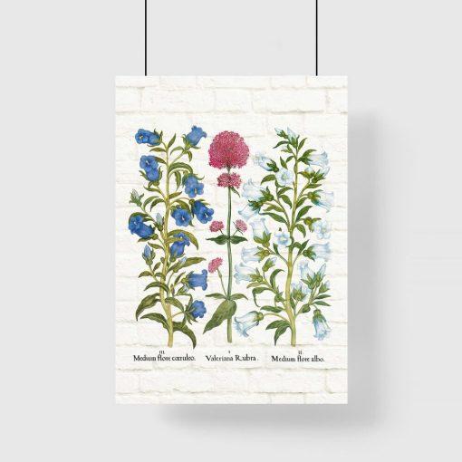 Plakat botaniczny z dzwonkiem ogrodowym do gabinetu