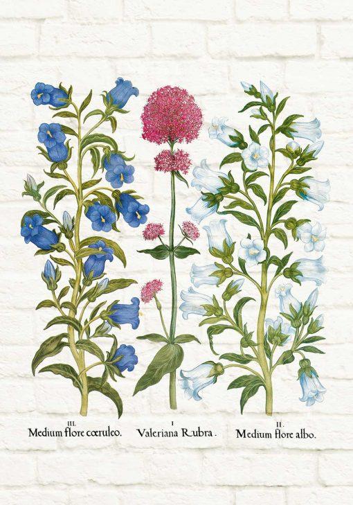 Plakat botaniczny z dzwonkiem ogrodowym do jadalni