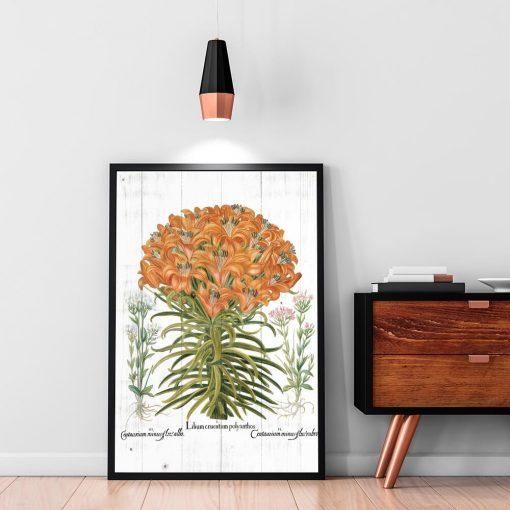 Plakat botaniczny z lilią pomarańczową na przedpokój