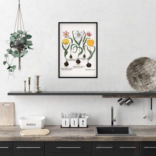 Plakat botaniczny z tulipanami do kuchni
