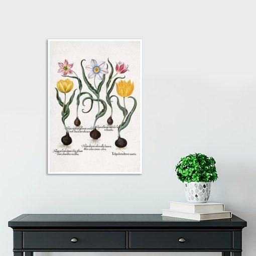 Plakat botaniczny z tulipanami na przedpokój