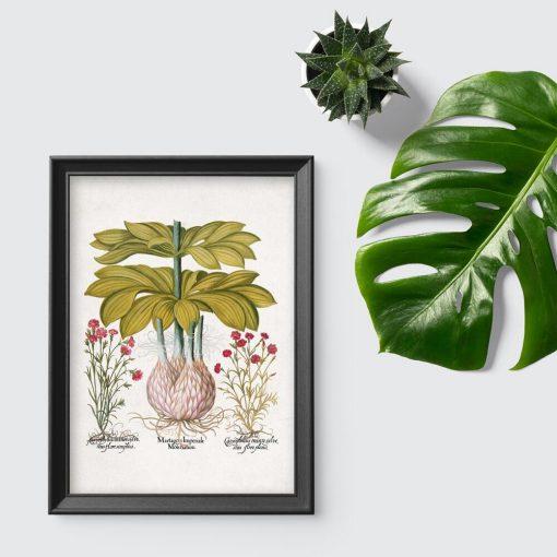 Plakat czerwone kwiatuszki i lilia - byliny
