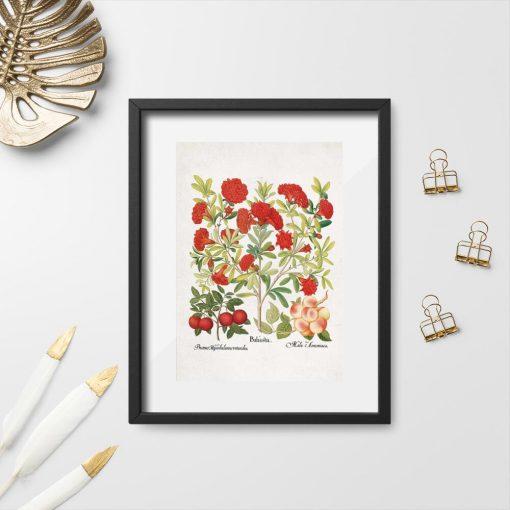 Plakat czerwone kwiaty i owoce