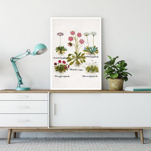 Plakat dla florysty - Biała stokrotka trwała na przedpokój