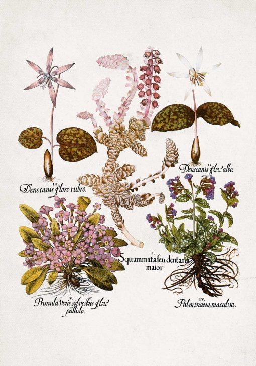 Plakat dla florysty - Prymulki do jadalni