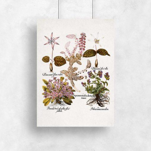 Plakat dla florysty - Prymulki do kuchni