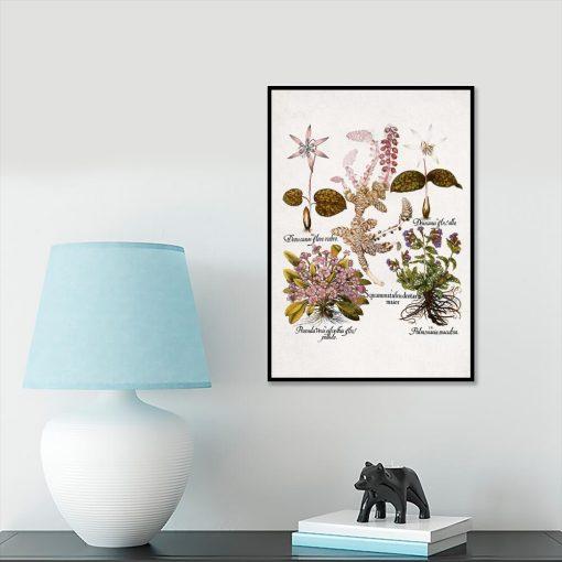Plakat dla florysty - Prymulki na przedpokój