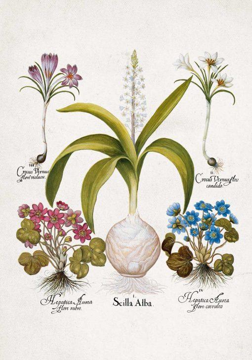 Plakat dla florysty z kwiatami przylaszczki do jadalni