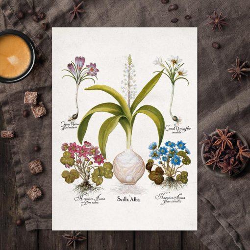 Plakat dla florysty z kwiatami przylaszczki do kuchni