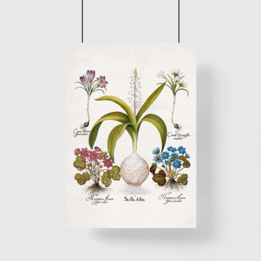 Plakat dla florysty z kwiatami przylaszczki do przedpokoju