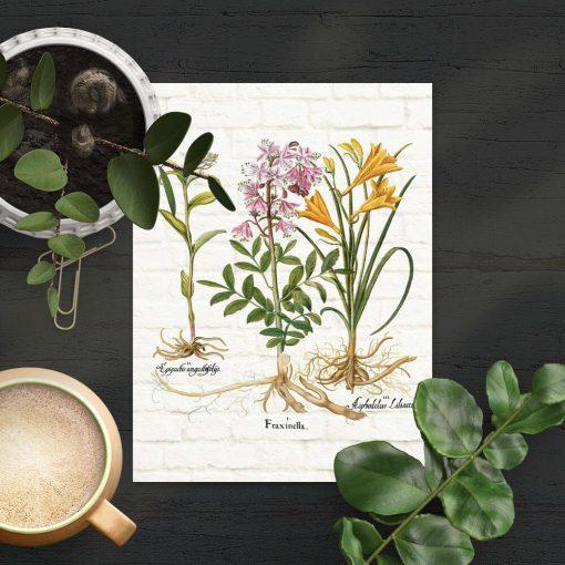 Plakat do sklepu ogrodniczego z rysunkami roślin i kwiatów