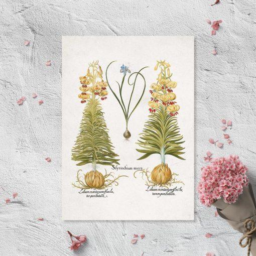 Plakat dydaktyczny z kwiatami