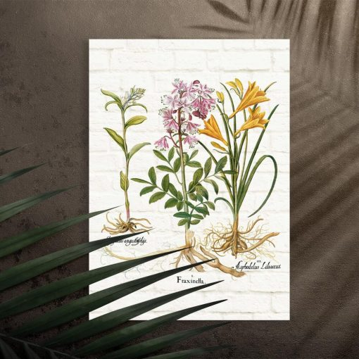 Plakat dydaktyczny z roślinami