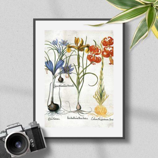 Plakat edukacyjny z kwiatami i ich cebulami