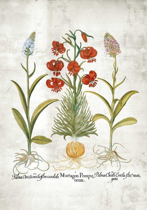 Plakat edukacyjny z kwiatami i ich nazwami
