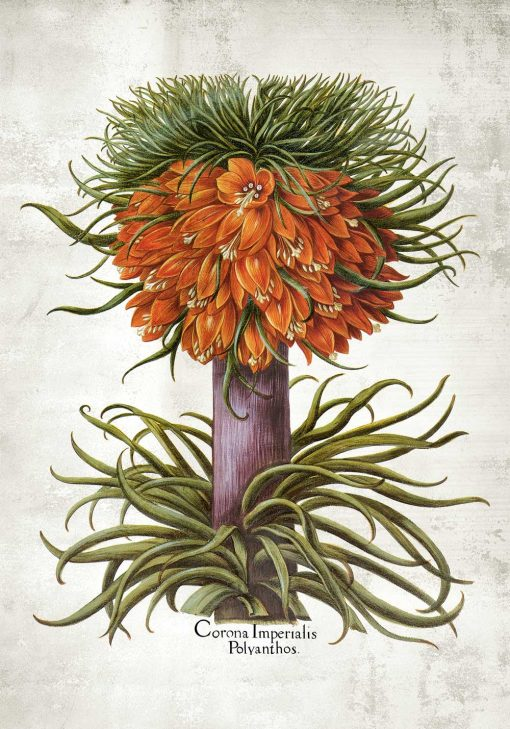 Plakat florystyczny z cesarską koroną