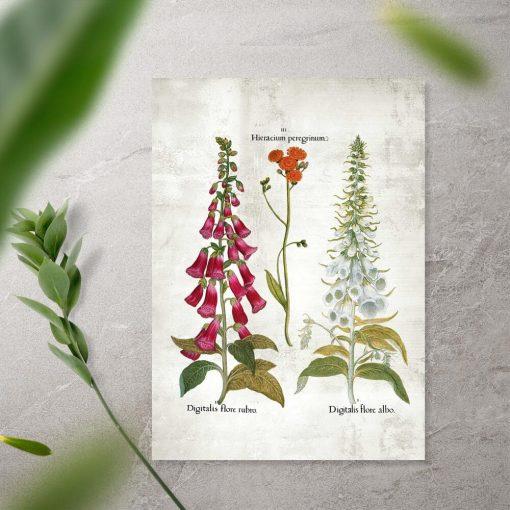 Plakat kwiaty ogrodowe i łacińskie nazwy