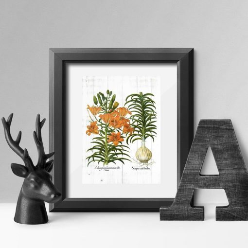 Plakat odmiany lilii tygrysiej