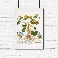 Plakat prowansalski z goryczką wiosenną do jadalni