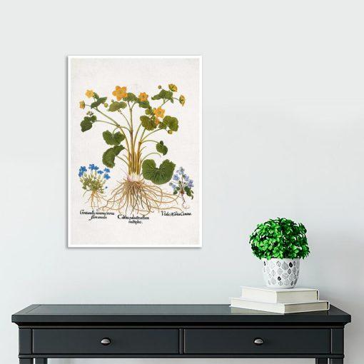 Plakat prowansalski z goryczką wiosenną do przedpokoju