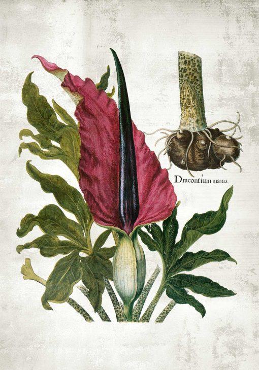 Plakat roślina zielna - żmijownik