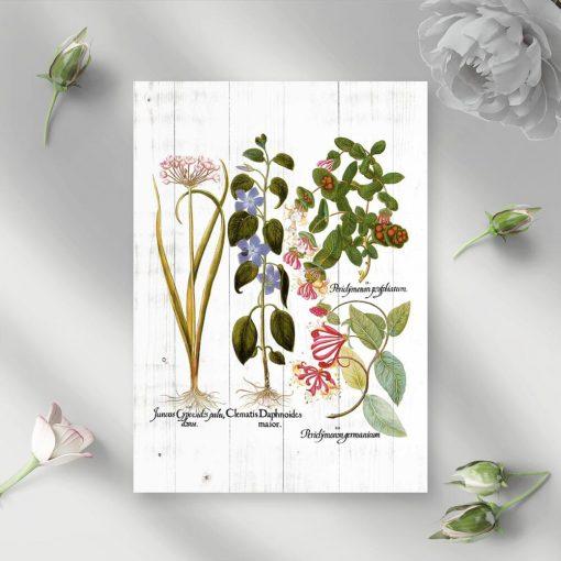 Plakat rośliny pnące i łacińskie nazwy