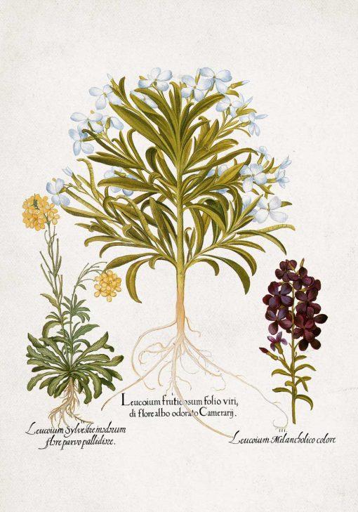 Plakat rośliny z drobnymi kwiatuszki