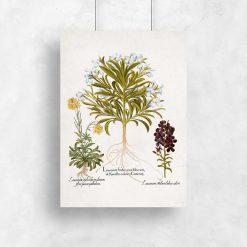 Plakat rośliny z malutki kwiatuszkami