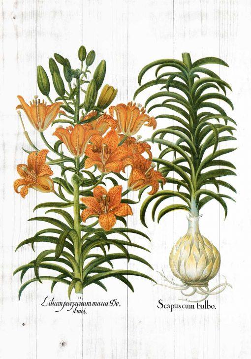 Plakat rustykalny z motywem lilii w kolorze pomarańczowym
