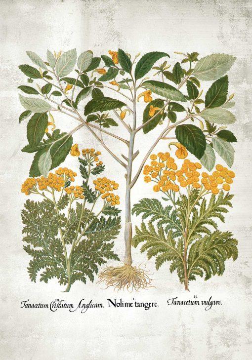 Plakat wrotycz pospolity i inne zioła