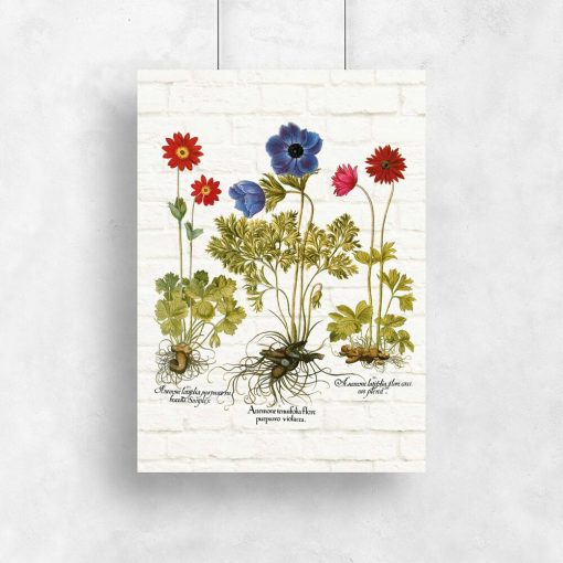 Plakat z anemonami