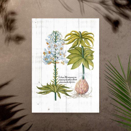 Plakat z białym kwiatem na tle desek i łacińskimi nazwami