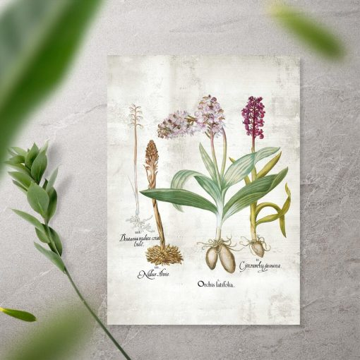 Plakat z gatunkami storczyków i ich korzeniami