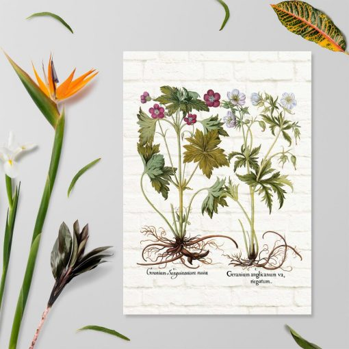 Plakat z geranium