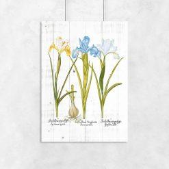 Plakat z irysami w pastelowych barwach