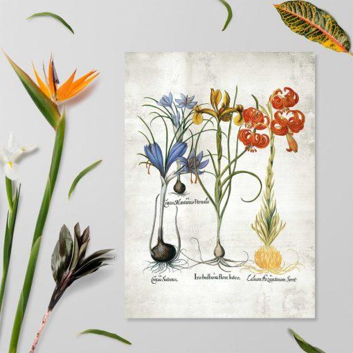 Plakat z kwiatami cebulowymi i łacińskimi nazwami
