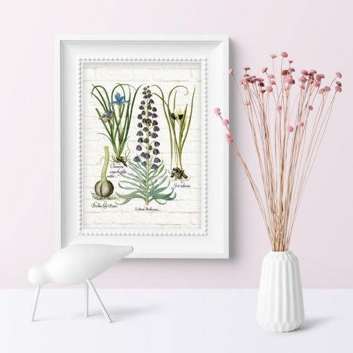 Plakat z kwiatami i ich łacińskimi nazwami do ozdoby sklepu
