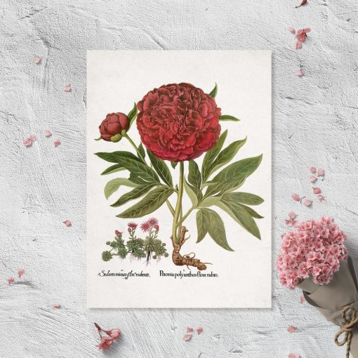 Plakat z kwiatami i łacińskimi nazwami